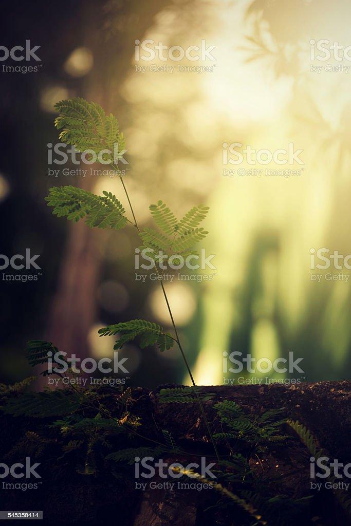 Morning glow plant bush under trees in woodland stock photo