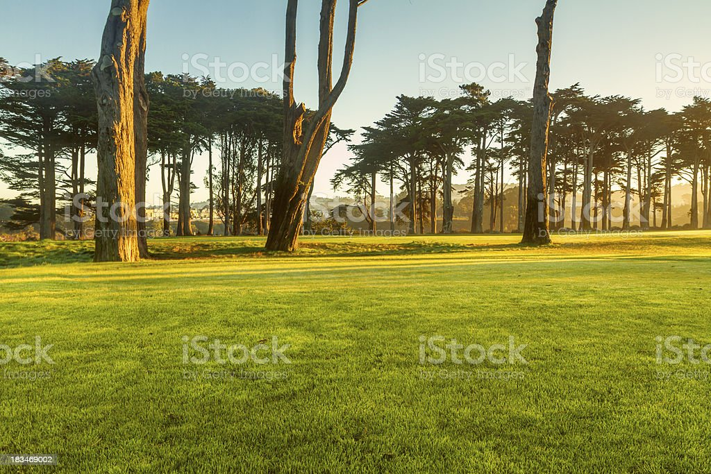 Morning golf royalty-free stock photo