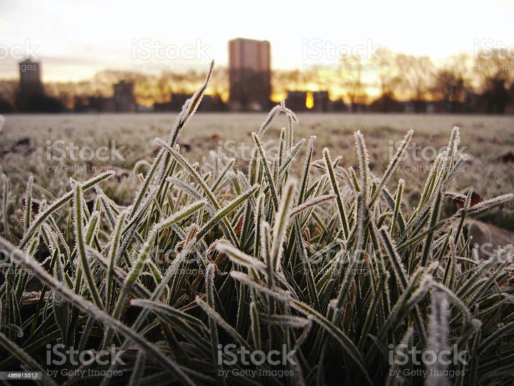 Morning grass frost with sunrise background stock photo