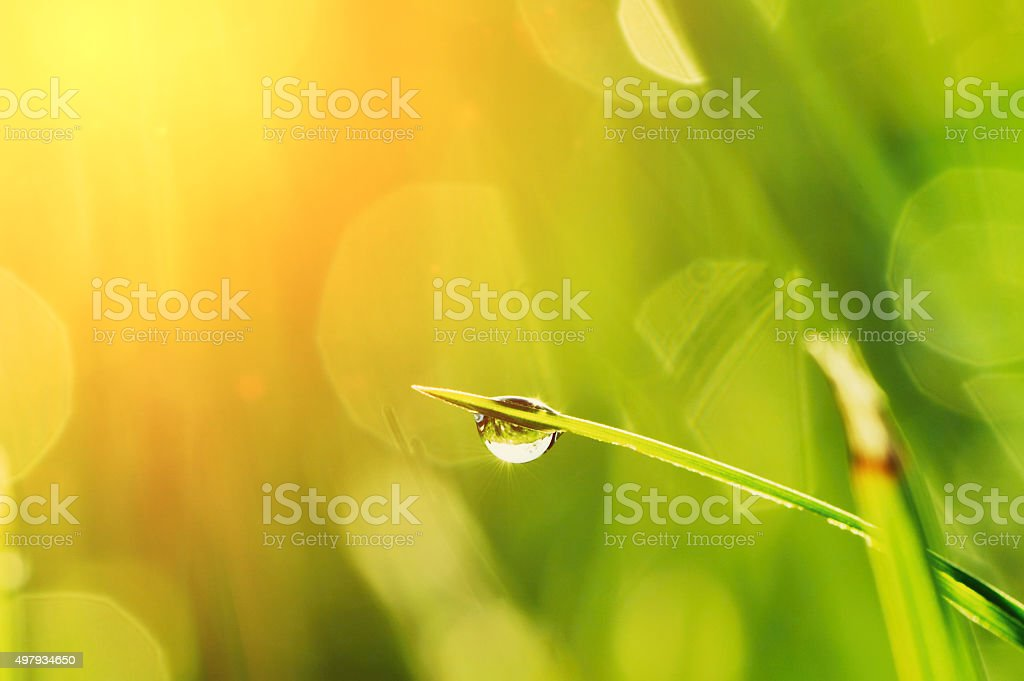 Morning grass stock photo