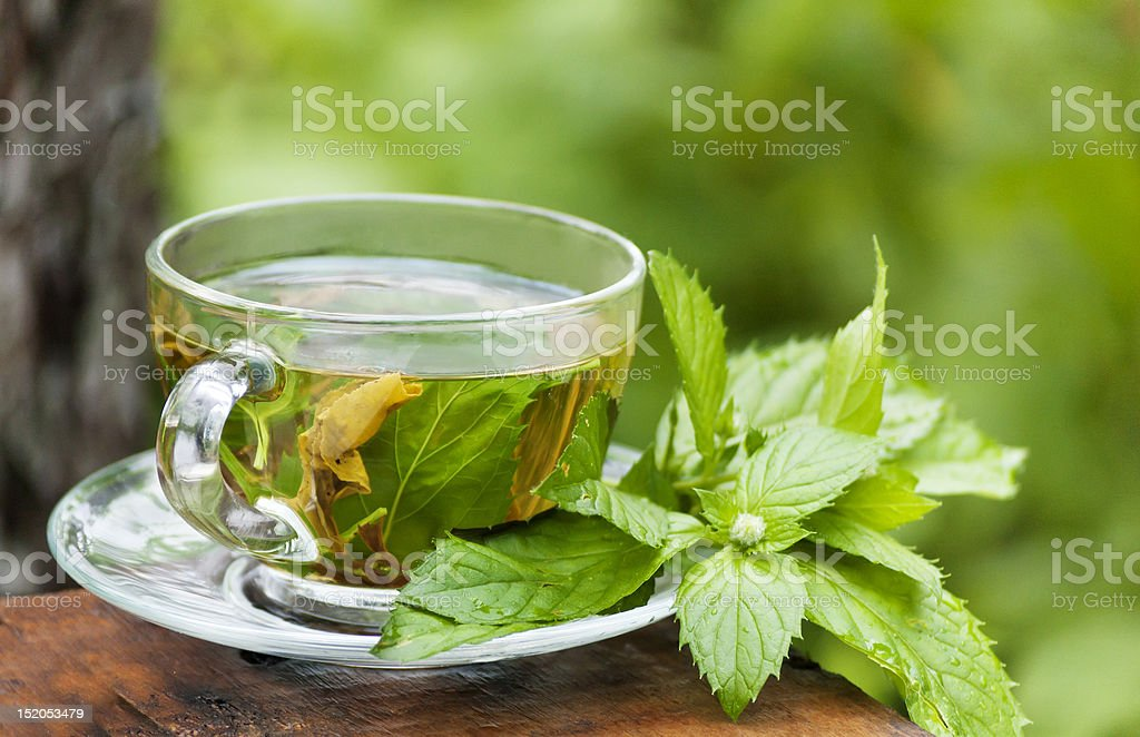 morning green mint tea at garden stock photo