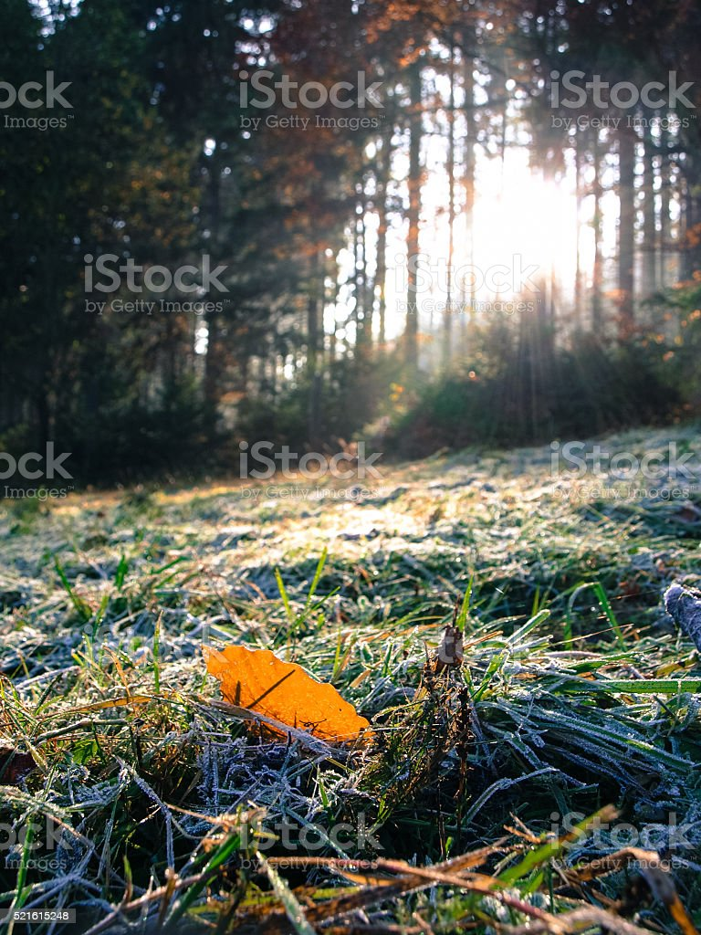 Morning hoar on the grass stock photo
