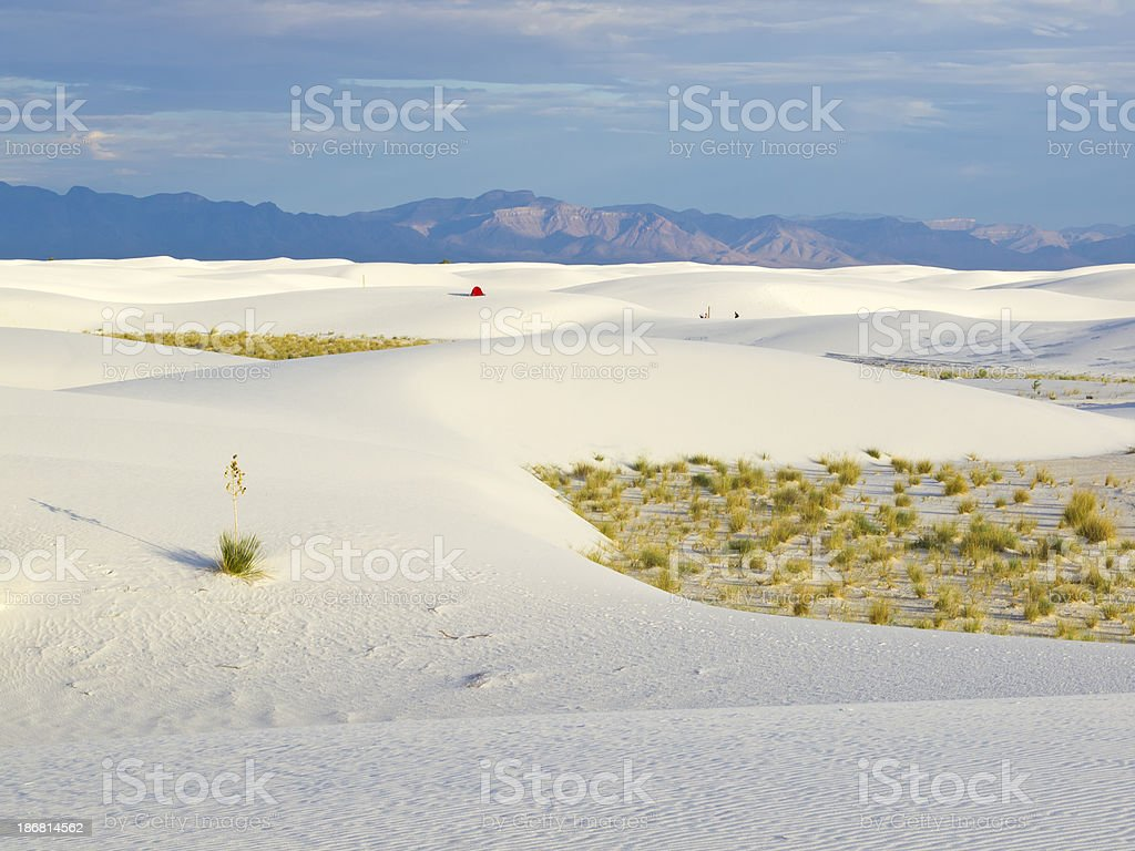 Morning in dunes stock photo