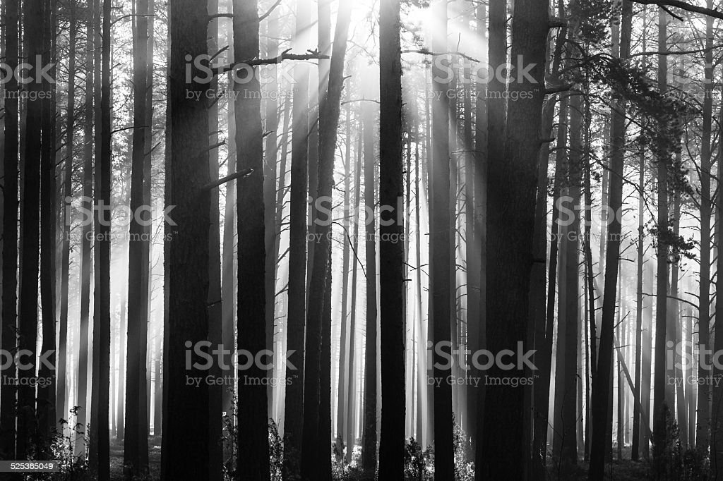 Morning in forest stock photo