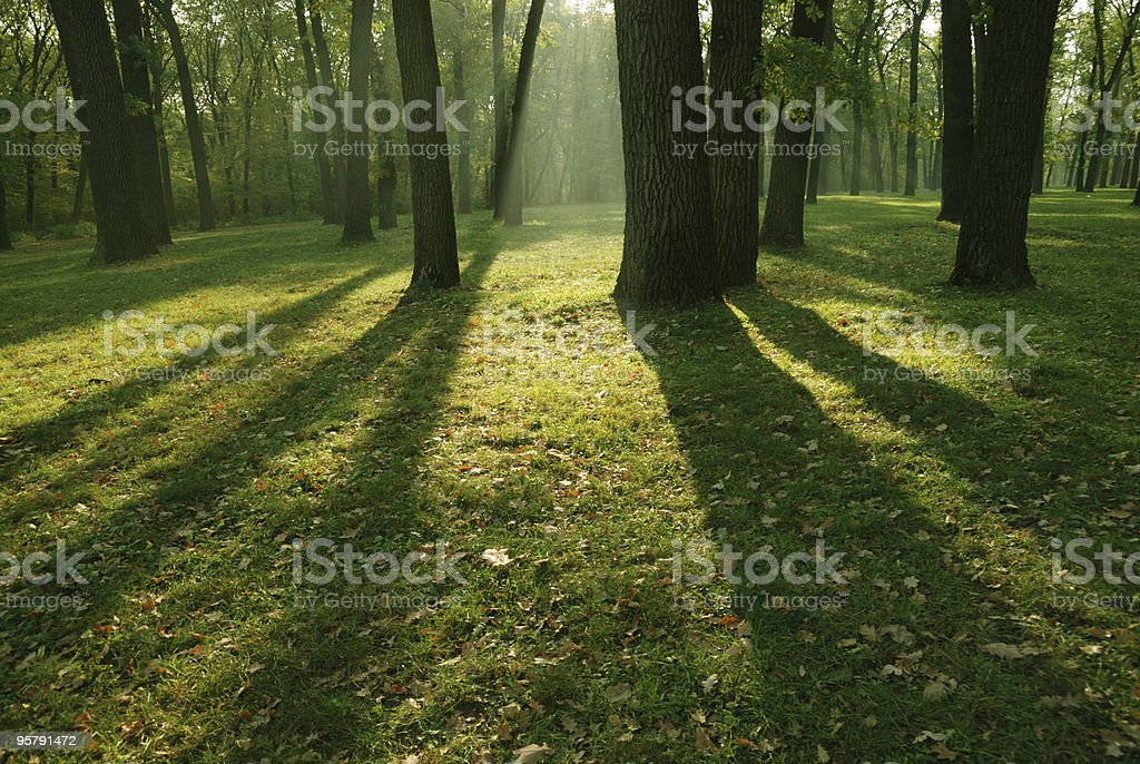 Morning in forest royalty-free stock photo