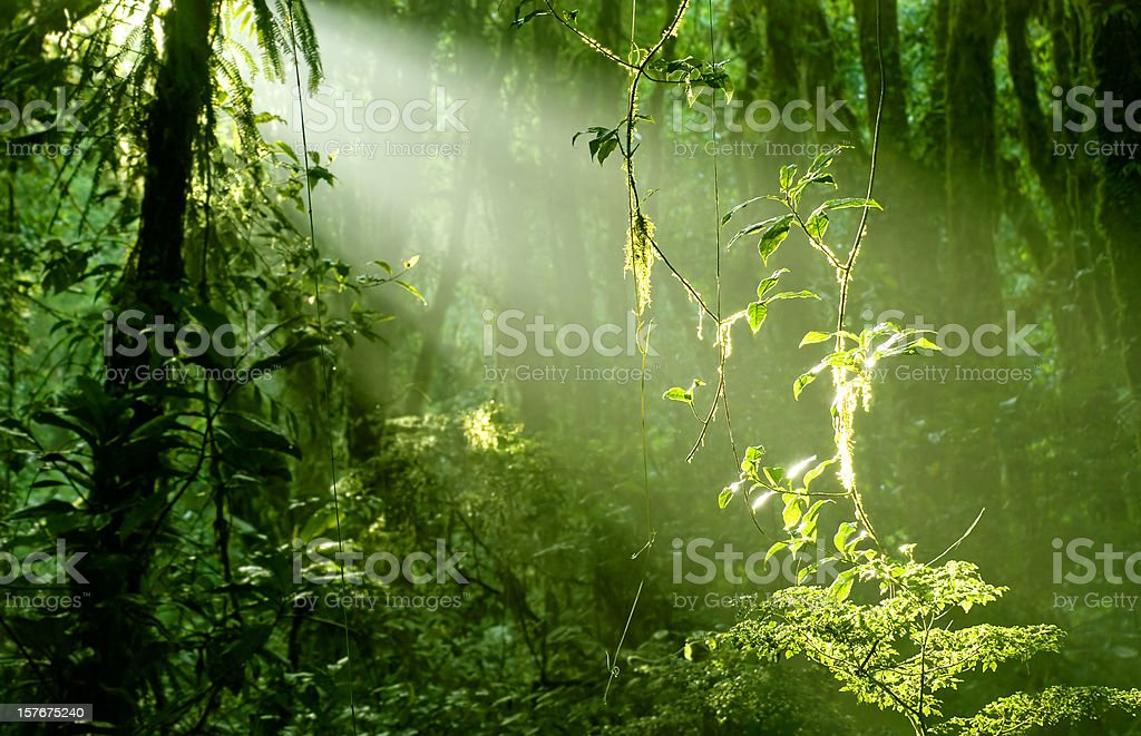 Morning in Rainforest stock photo