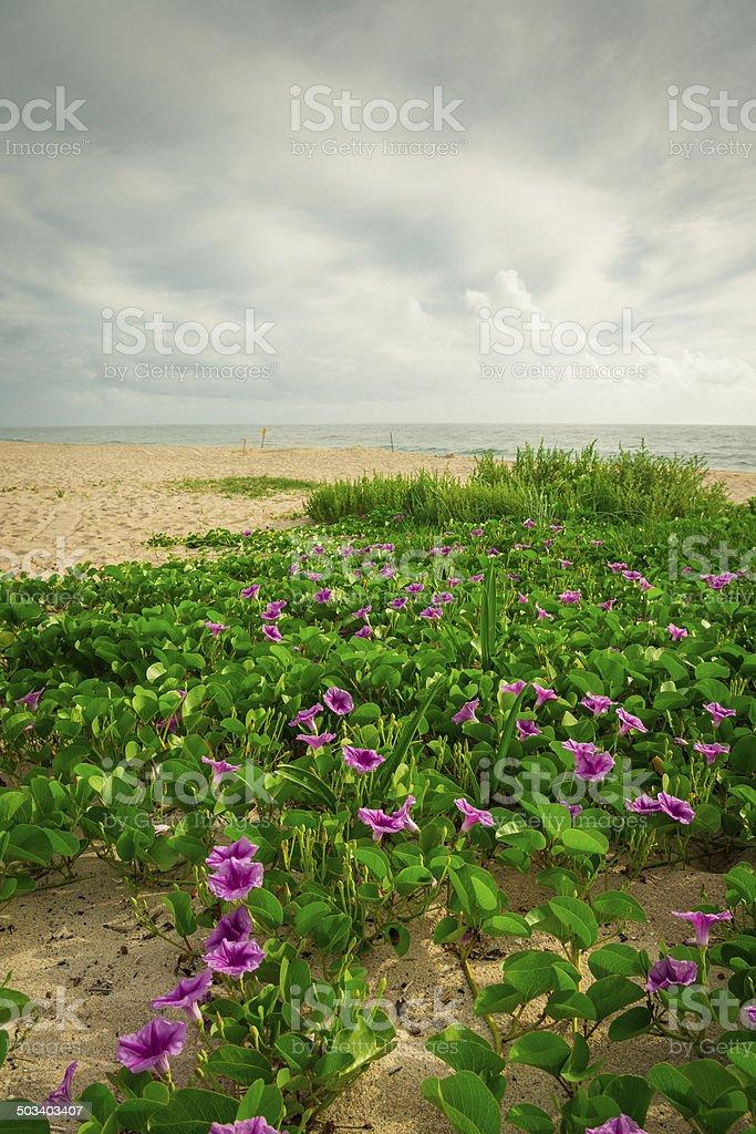Morning in Sebastian Beach stock photo