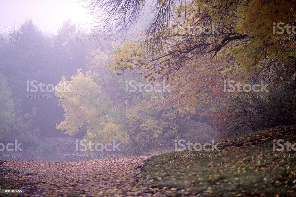 Morning in the fog royalty-free stock photo