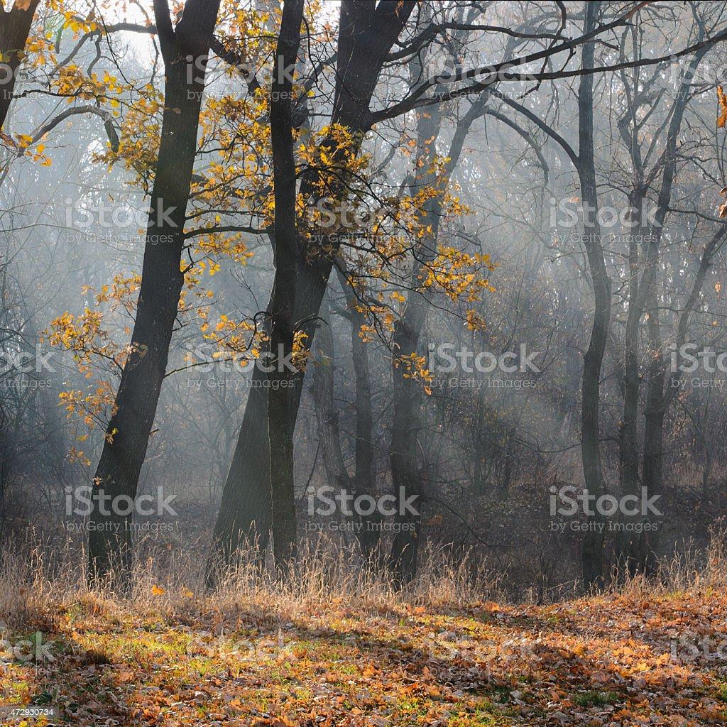 La mañana en el bosque foto de stock libre de derechos
