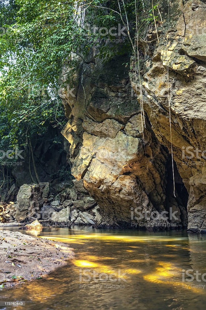 Morning in the wild jungle royalty-free stock photo