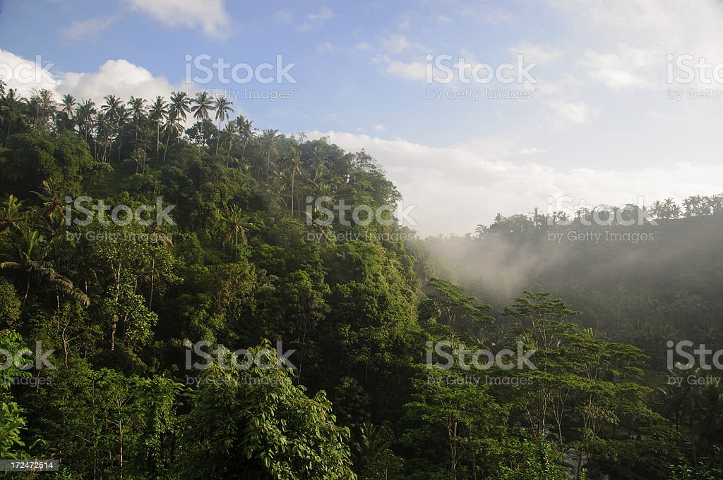 Morning in Tropical Rainforest royalty-free stock photo