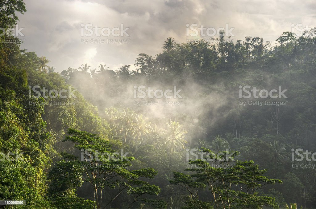 Morning in Tropical Rainforest stock photo
