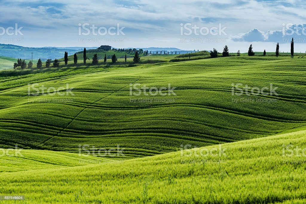 Morning landscape from Tuscany stock photo