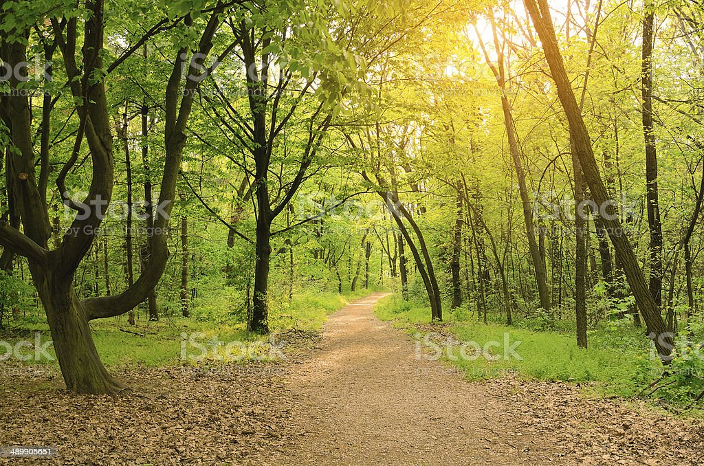 Morning light falls on a forest road stock photo