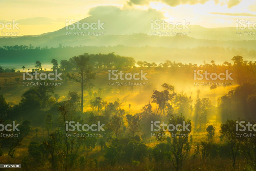 Morning Light Field slang Luang Phetchabun stock photo