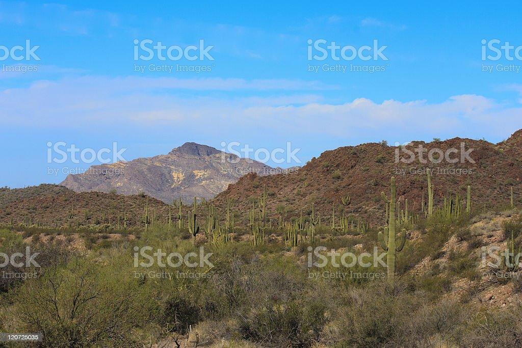 Morning Light in Organ Pipe Cactus NM Arizona royalty-free stock photo