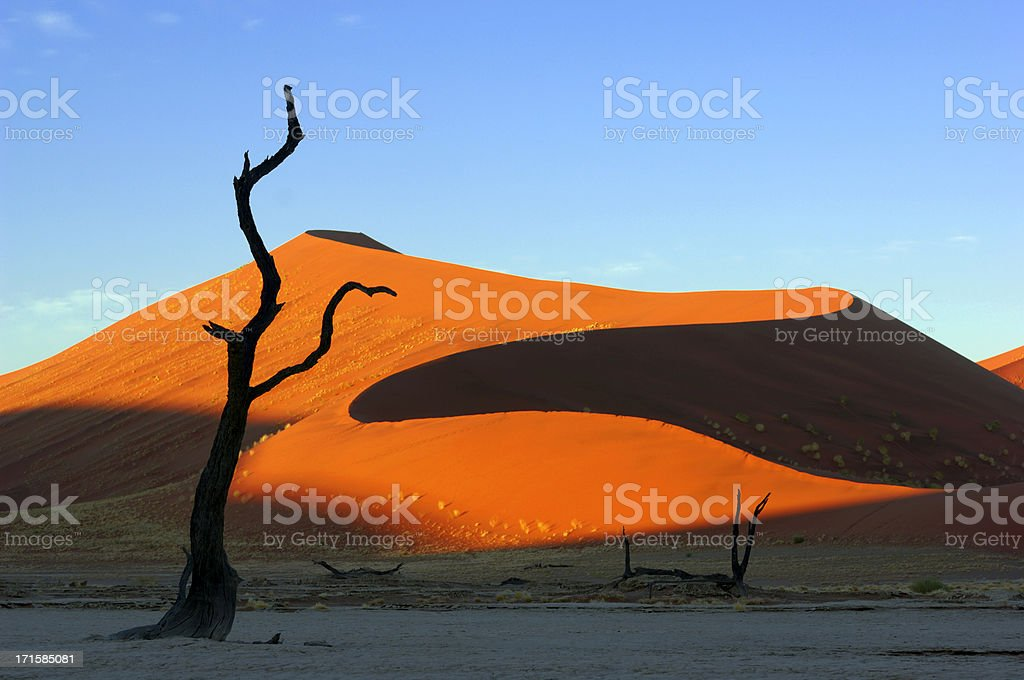 Morning light on a dune with tree in foreground stock photo