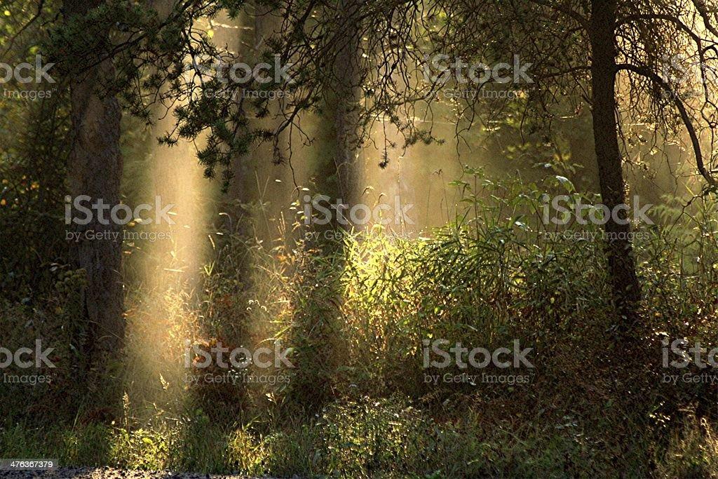 Morning Light royalty-free stock photo