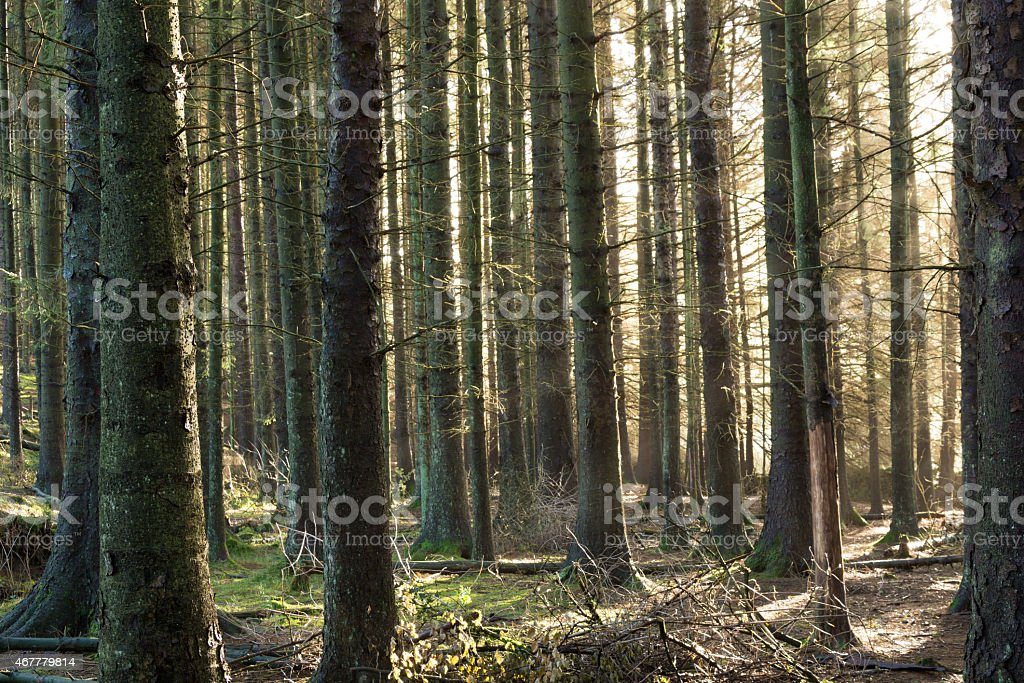 Morning Light Shining Through The Forest. stock photo