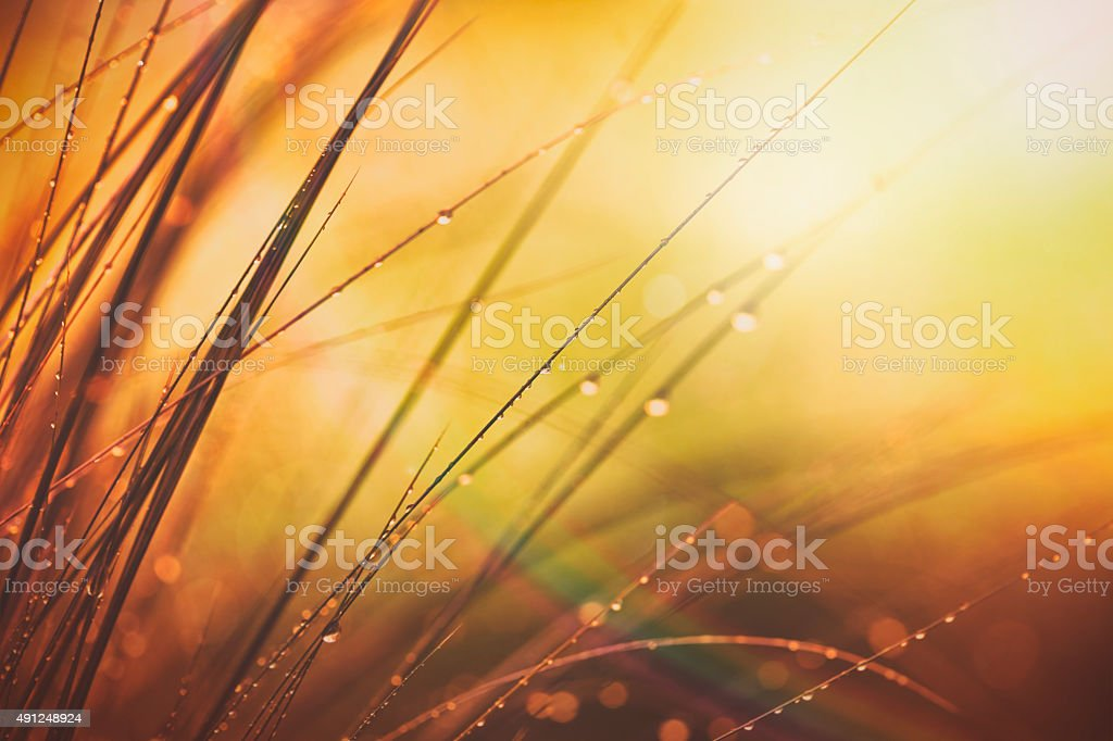 Morning meadow with dew stock photo