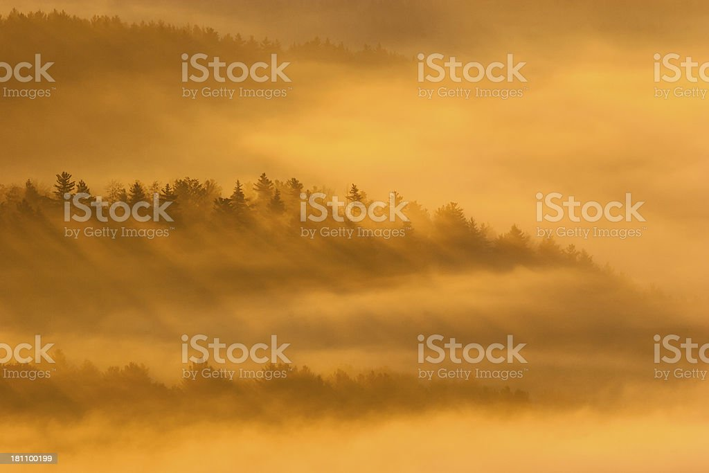 Morning Mist and pines royalty-free stock photo