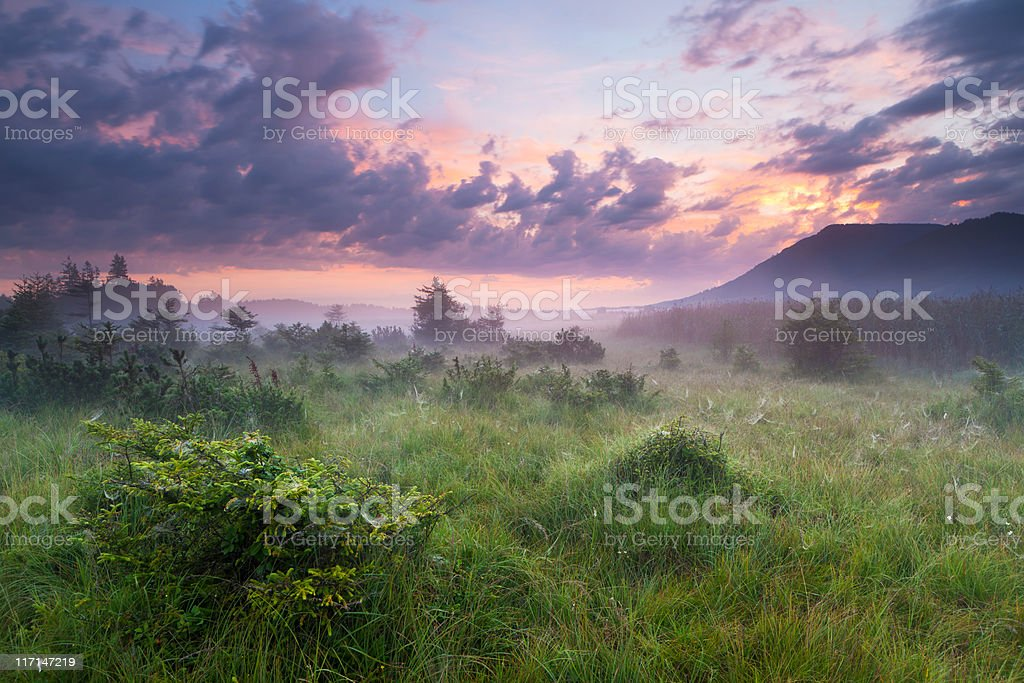 morning mist in a moor with dramatic sky, bavaria, germany stock photo