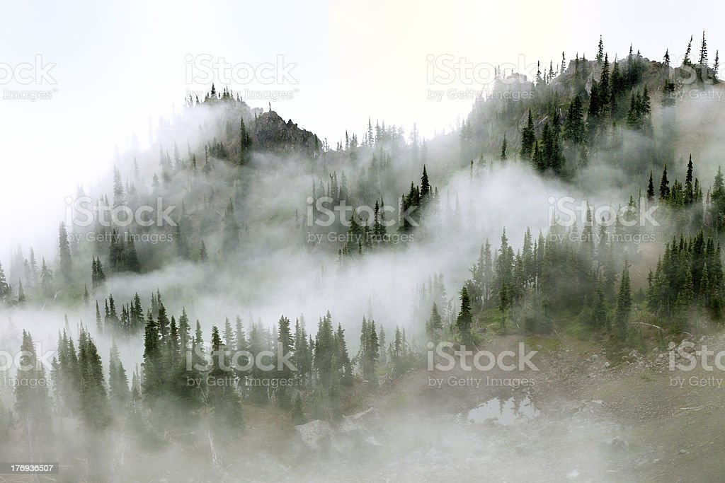 Morning mist in Olympic National Park stock photo