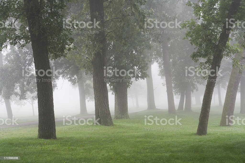 Morning Mist in the Park royalty-free stock photo