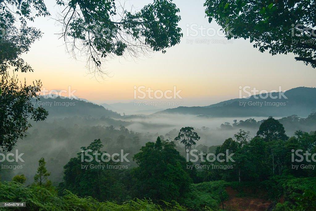 Morning mist on mountain stock photo
