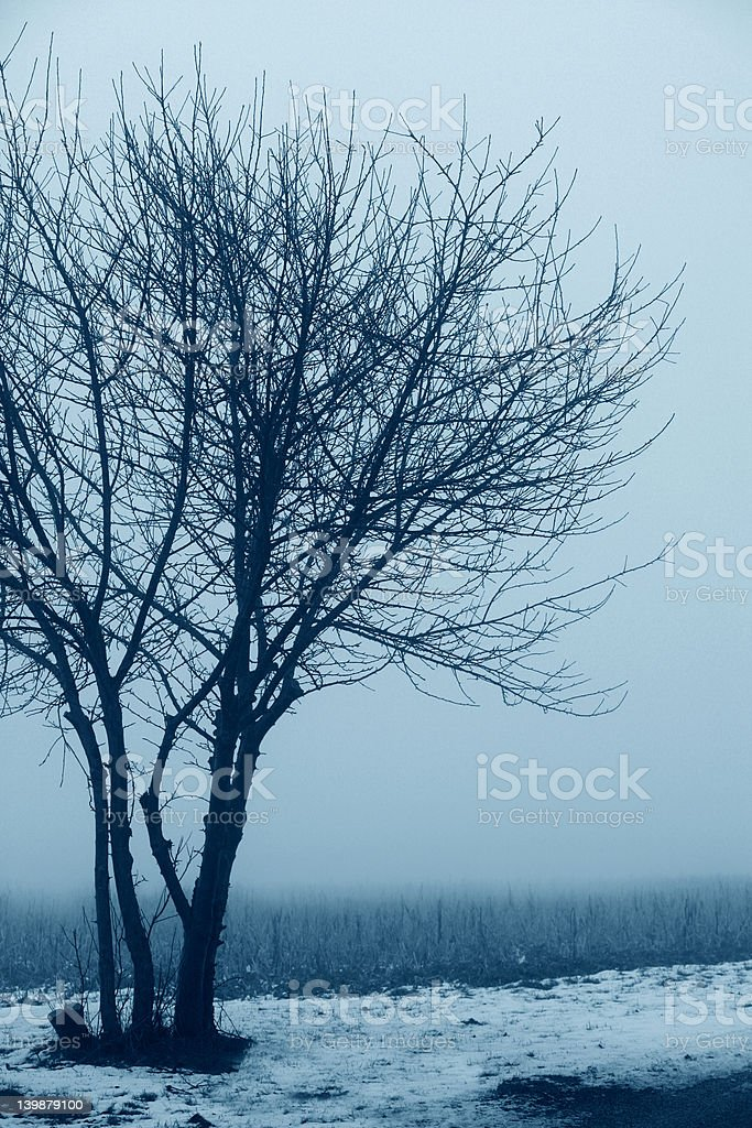 Morning mist over field royalty-free stock photo