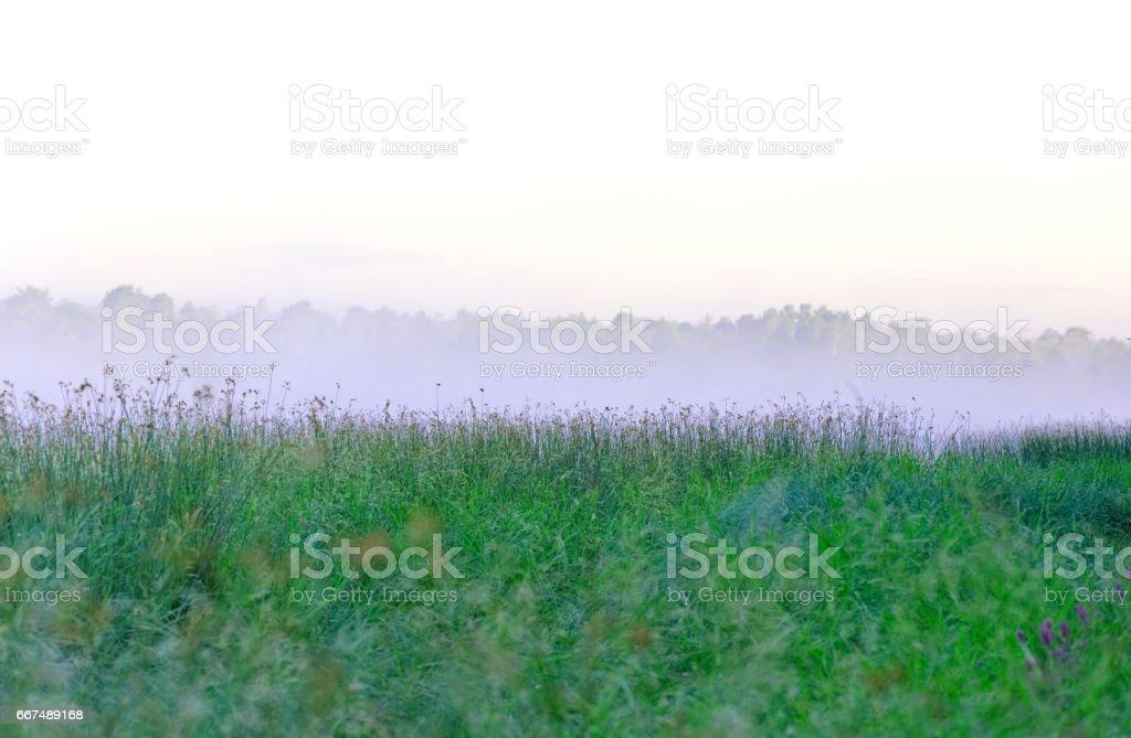 Morning mist over the lake sedge stock photo