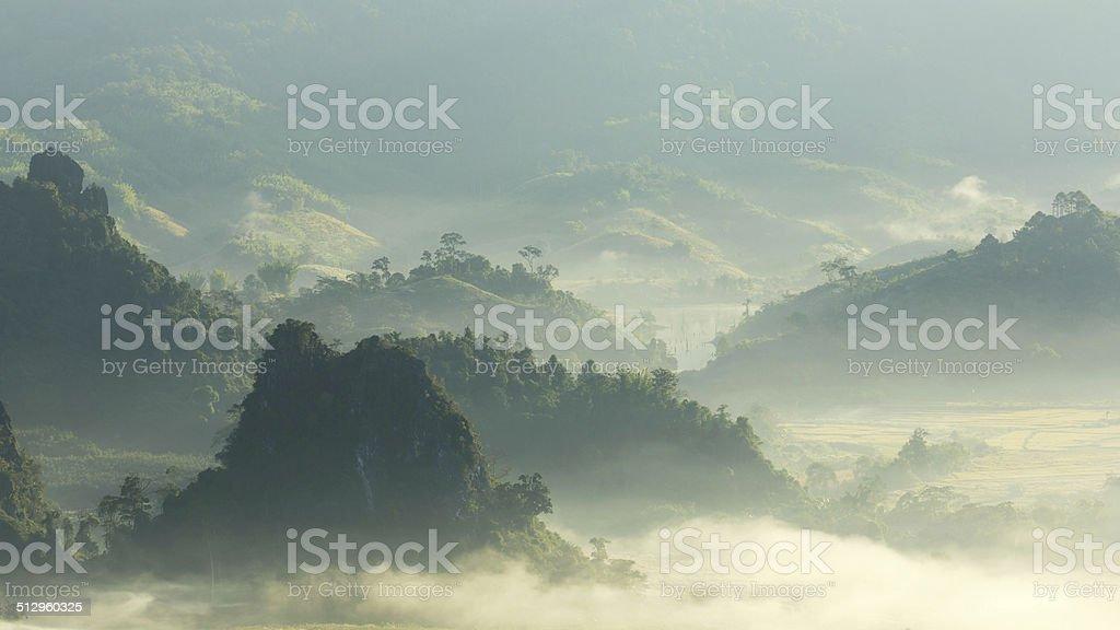 Morgen Nebel Lizenzfreies stock-foto