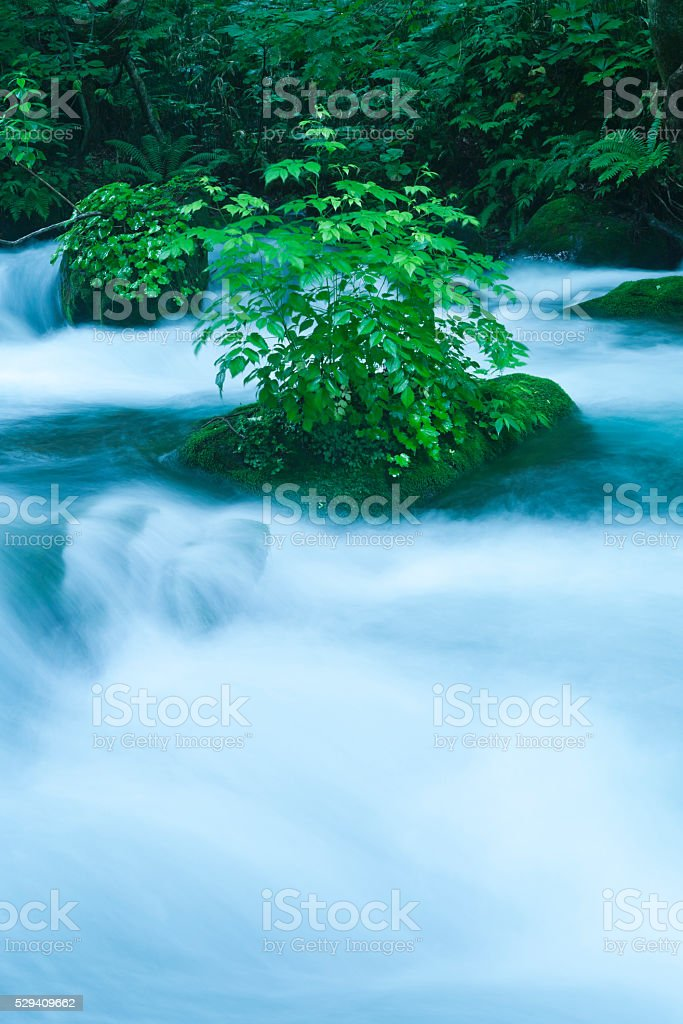 Morning Mountain Stream in Japan stock photo