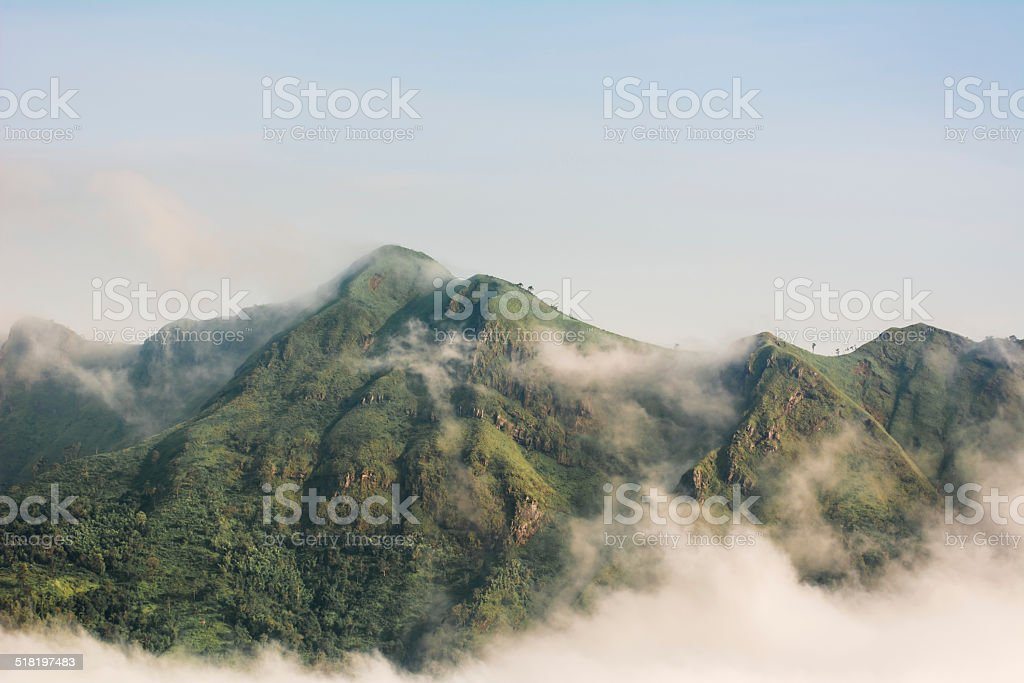 morning mountain with fog stock photo