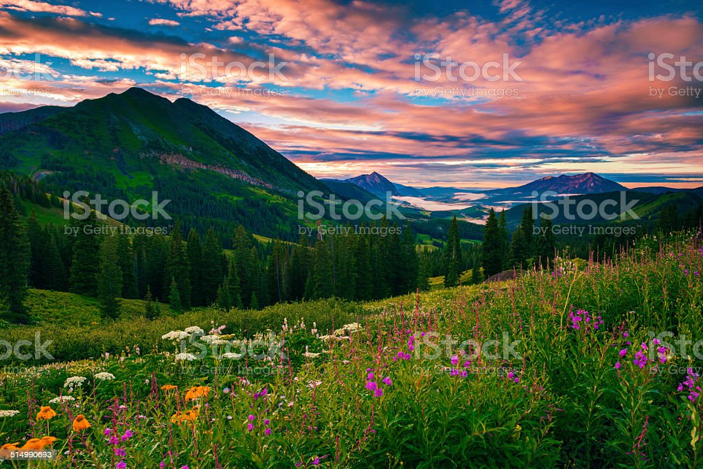 morning of summer stock photo