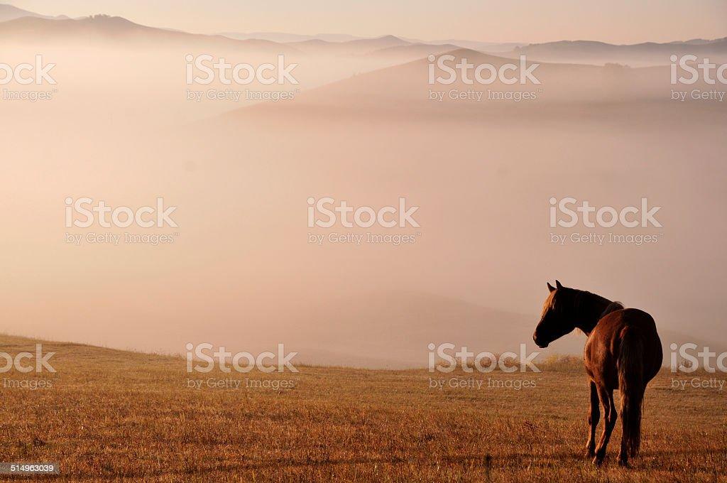 Morning of The Ulan integration grassland stock photo