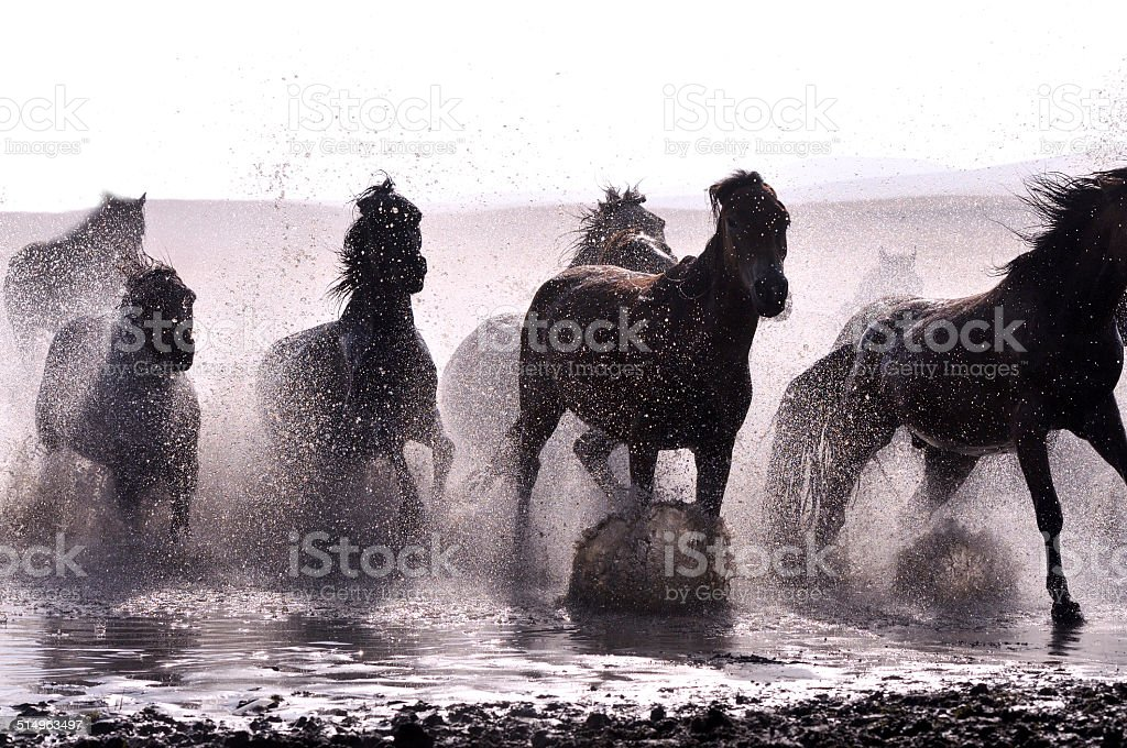 Morning of The Ulan integration grassland stock photo