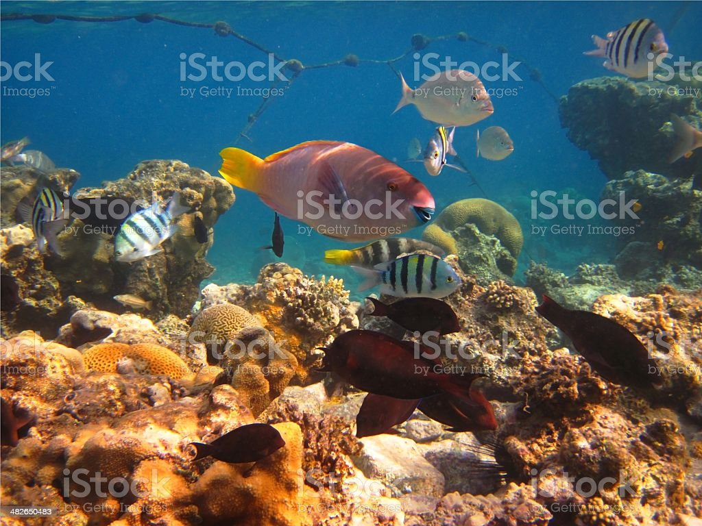 morning on a coral reef stock photo