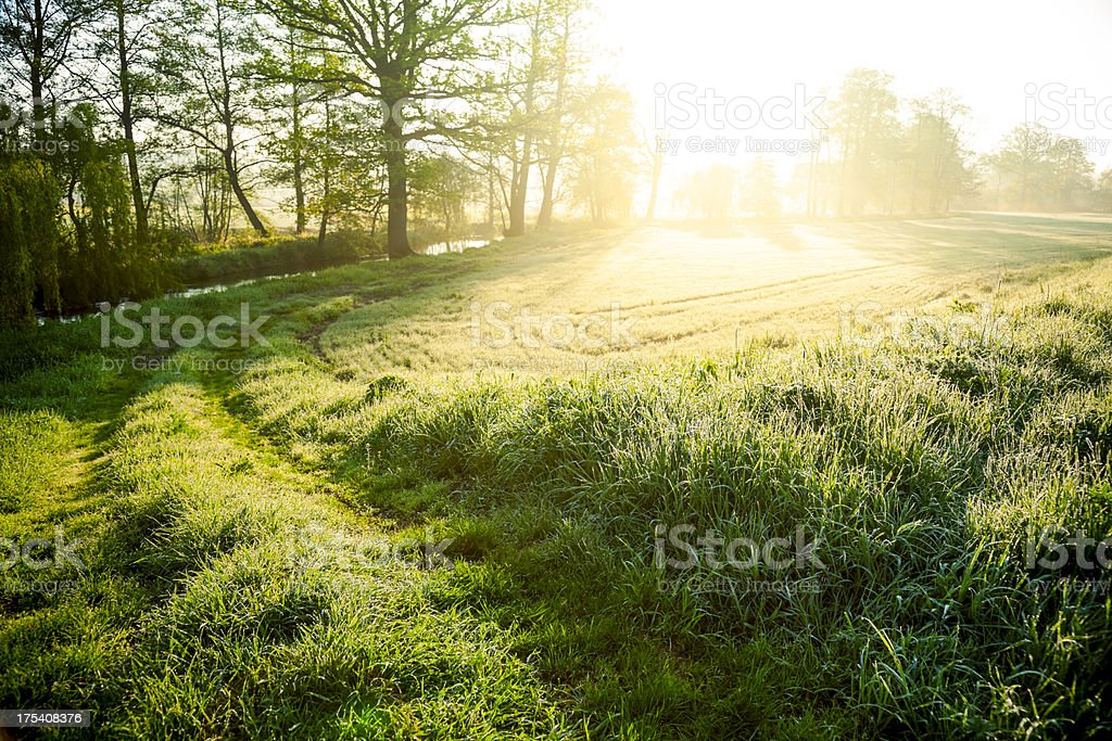 Morning on meadow stock photo