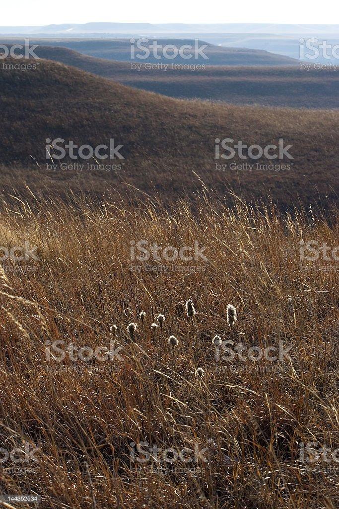 Morning on the Konza Prairie stock photo