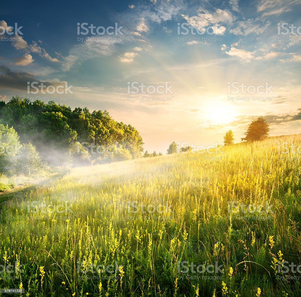 Morning over blossoming field stock photo
