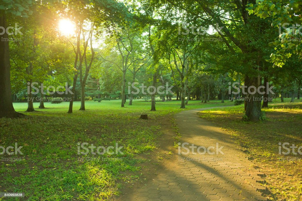 Morning park stock photo