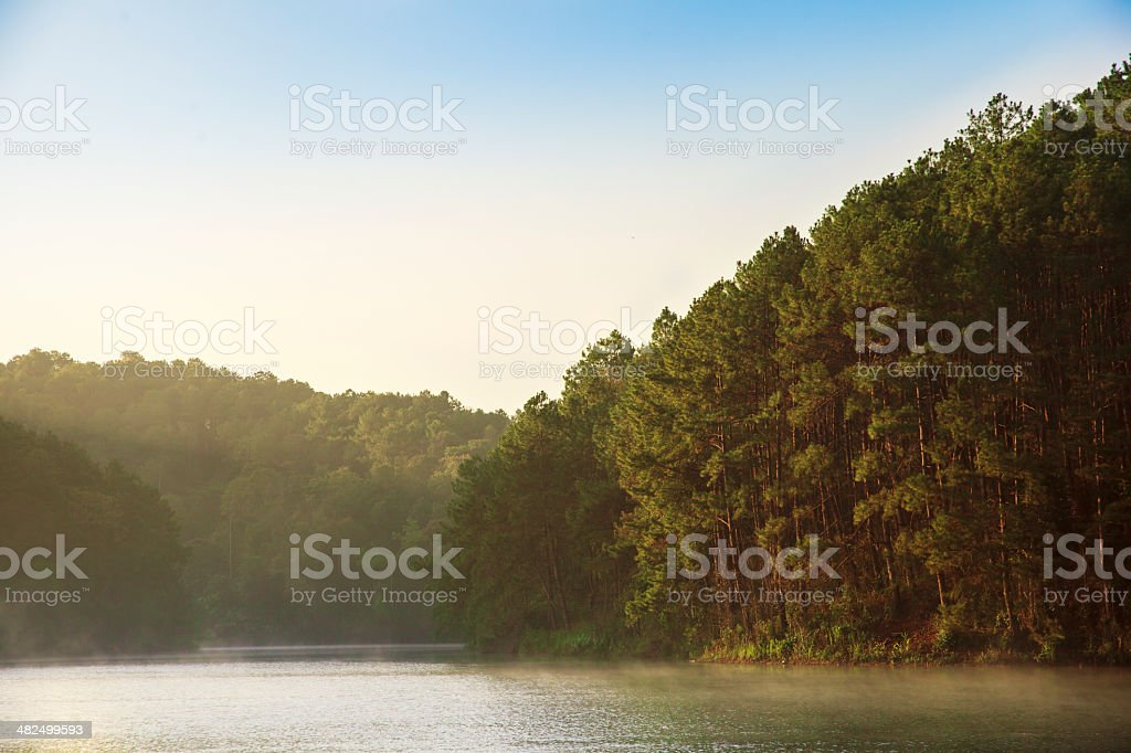 morning pine forest at Pang Ung. Mae Hong Son. Thailand stock photo