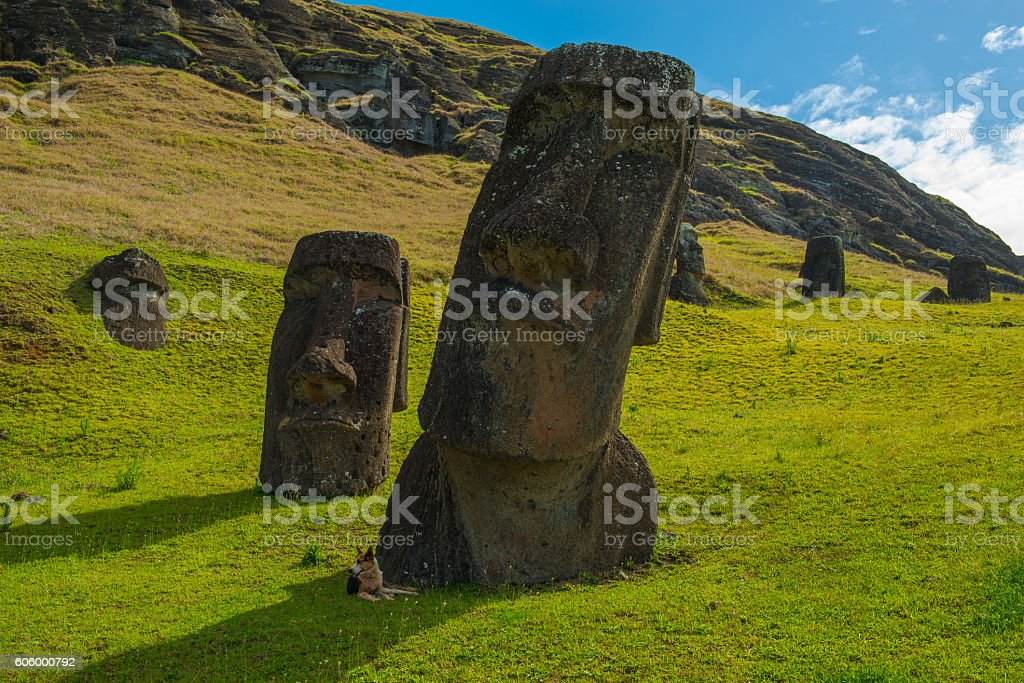 Rano Raraku Dog stock photo