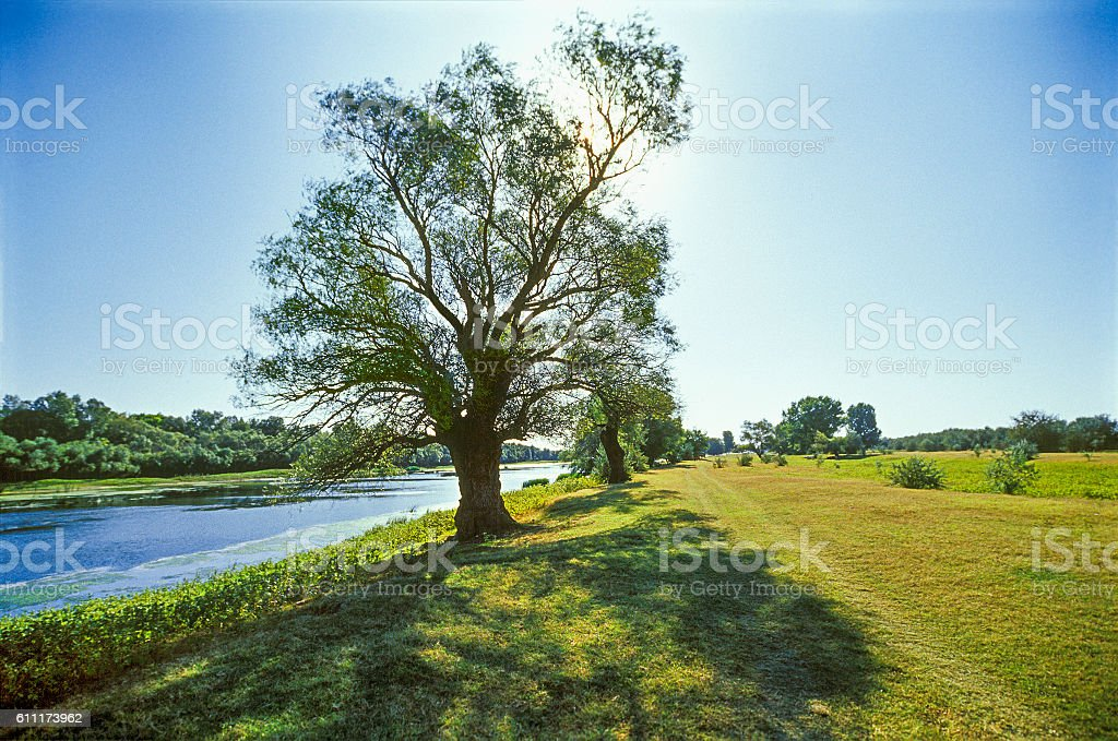 Morning , riverbank, shallow water,  September. Astrakhan region, Russia stock photo