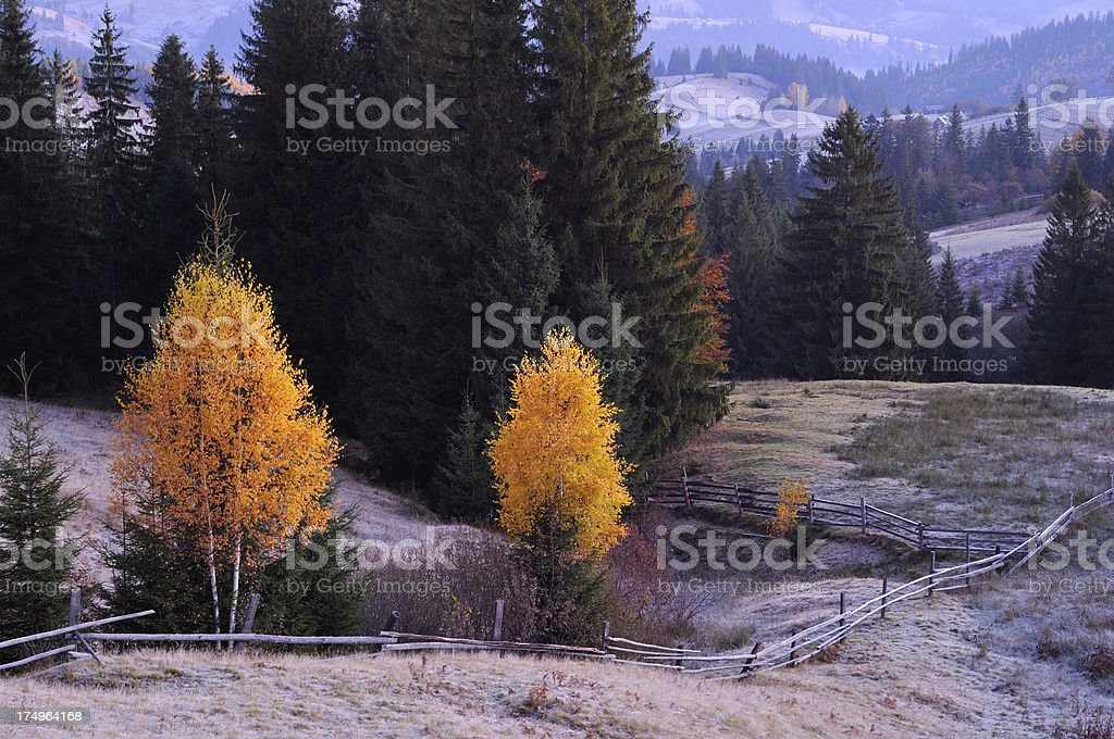 Morning rural landscape with yellow trees and hoarfrosted grass stock photo