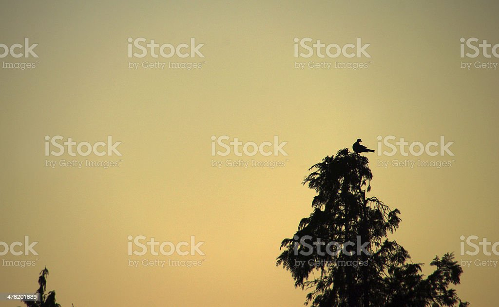Morning silhouette in the country royalty-free stock photo