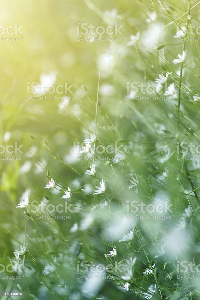 Morning Spring Meadow royalty-free stock photo