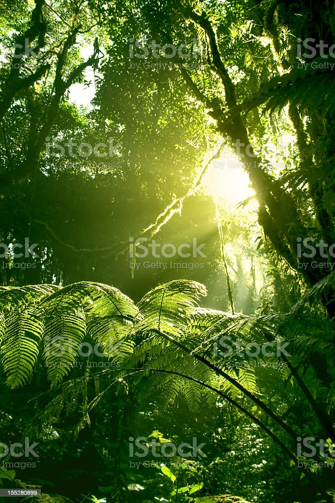 Morning sun in Costa Rican rainforest stock photo