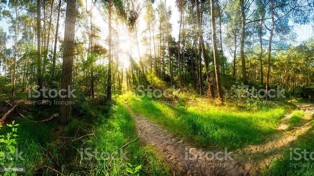 Morning sun in the forest stock photo